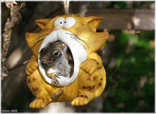 Photos humouristiques de nos amis les animaux... - Page 3 25145210