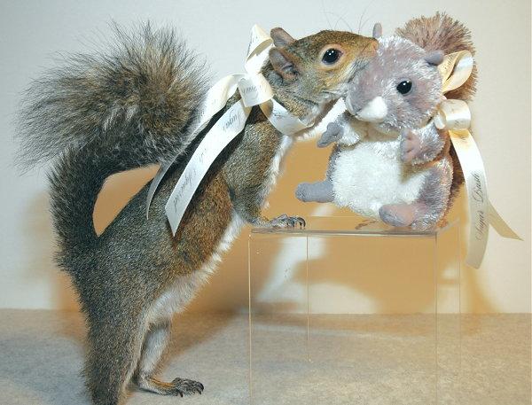 Photos humouristiques de nos amis les animaux... - Page 4 29781110