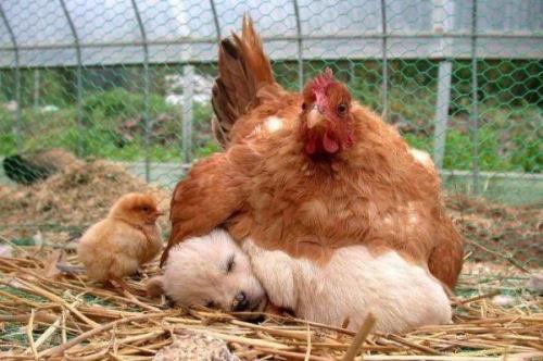 Photos humouristiques de nos amis les animaux... - Page 3 32-ins10