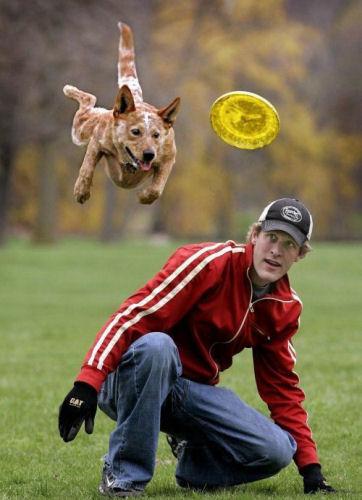 Photos humouristiques de nos amis les animaux... - Page 3 32-ins11
