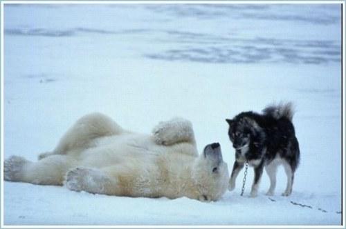 Photos humouristiques de nos amis les animaux... - Page 3 62681710