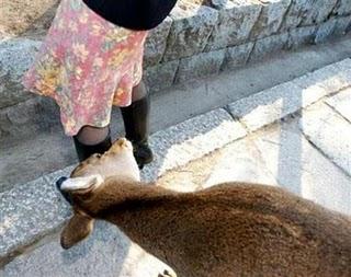 Photos humouristiques de nos amis les animaux... - Page 4 Animal11