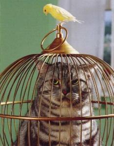 Photos humouristiques de nos amis les animaux... - Page 3 Bird-c10