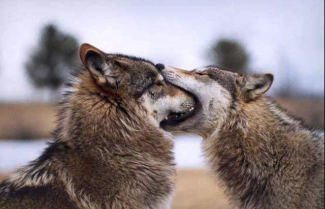 Photos humouristiques de nos amis les animaux... - Page 3 Bisous10