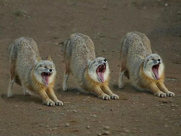 Photos humouristiques de nos amis les animaux... - Page 4 Cute-a10