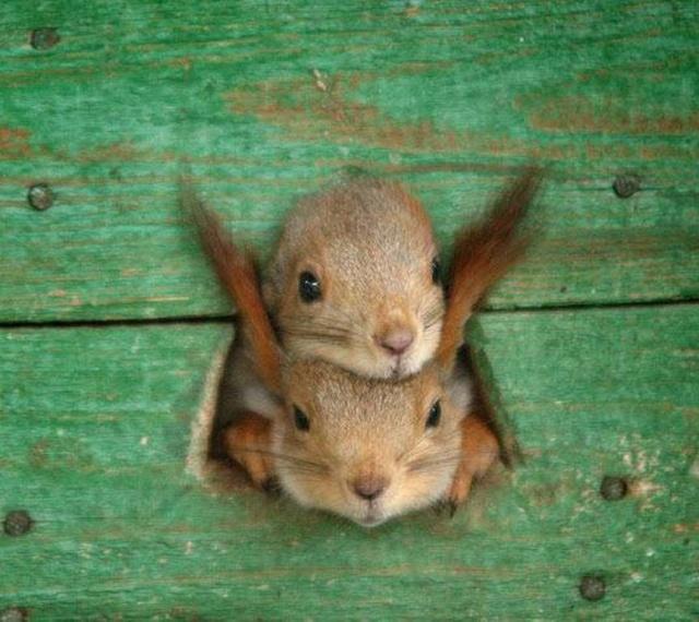 Photos humouristiques de nos amis les animaux... - Page 3 Ecureu12
