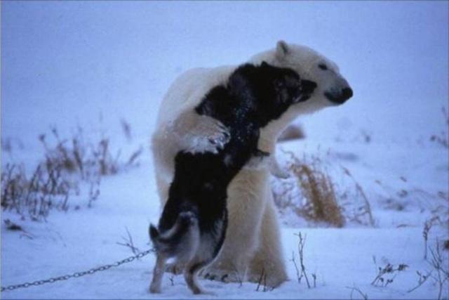 Photos humouristiques de nos amis les animaux... - Page 4 Florao10