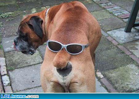Photos humouristiques de nos amis les animaux... - Page 3 Funny-15