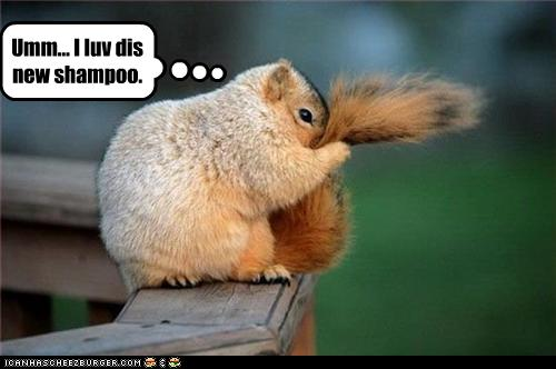 Photos humouristiques de nos amis les animaux... - Page 4 Funny-19