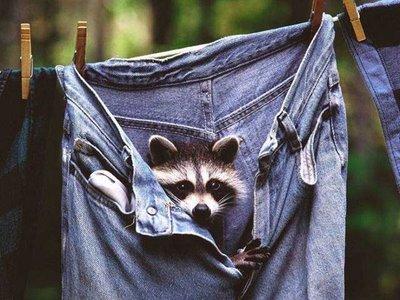Photos humouristiques de nos amis les animaux... - Page 4 Funny-20