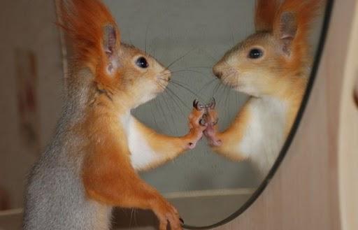 Photos humouristiques de nos amis les animaux... - Page 4 Funny_12