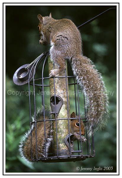Photos humouristiques de nos amis les animaux... - Page 3 Grey-s10