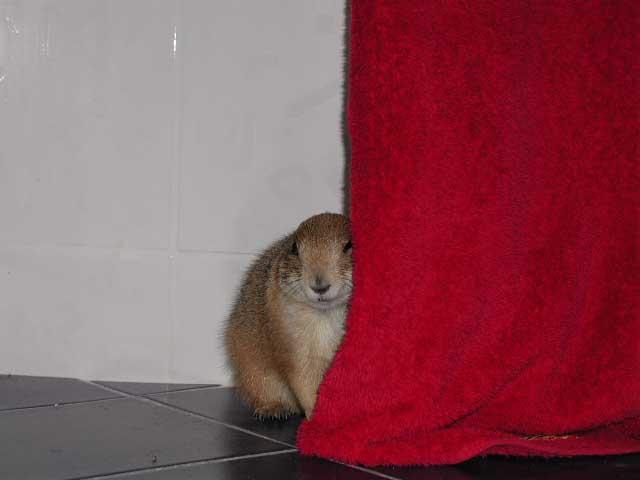 Photos humouristiques de nos amis les animaux... - Page 3 P5060010