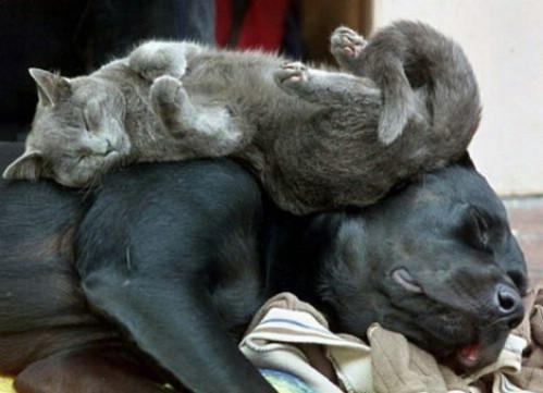 Photos humouristiques de nos amis les animaux... - Page 4 Photo211