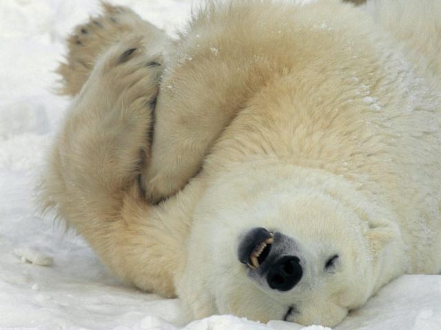 Photos humouristiques de nos amis les animaux... - Page 4 Way_la10