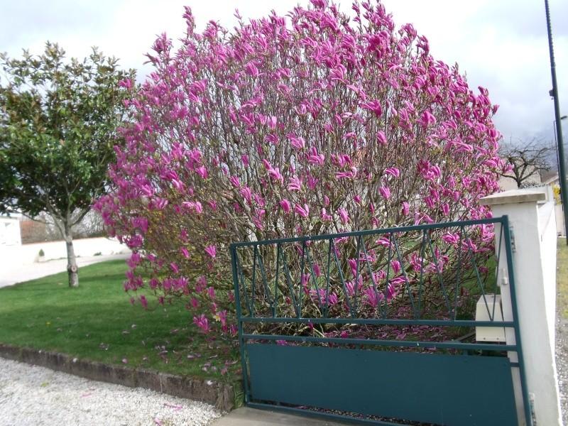 Les Magnolias Dscf0313
