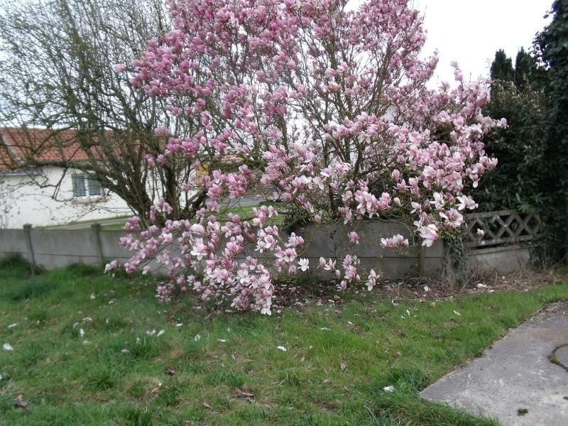 Les Magnolias Dscf0314