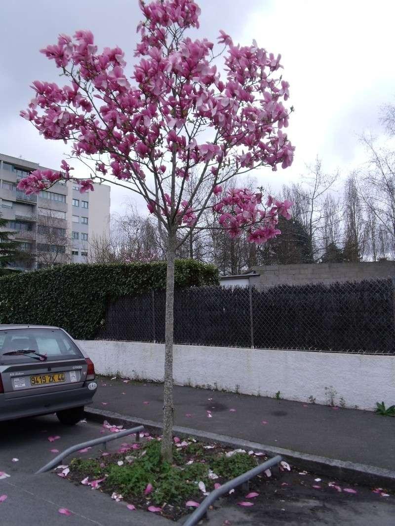 Les Magnolias Dscf0315