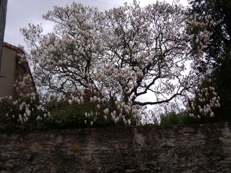 Les Magnolias Dscf0316