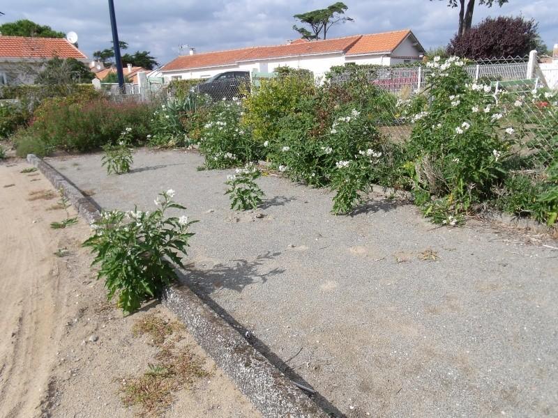Les Solanums Solanu10