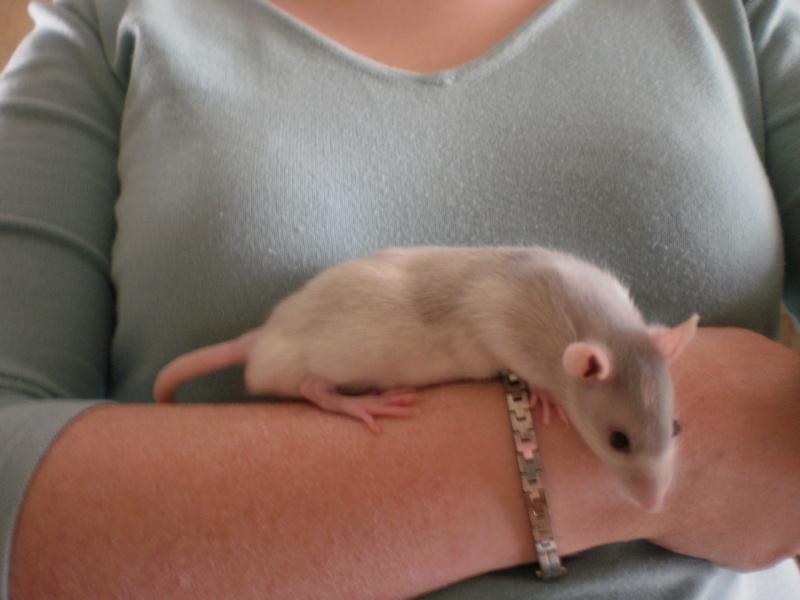 Achat d'un bébé rat ;) P4072010