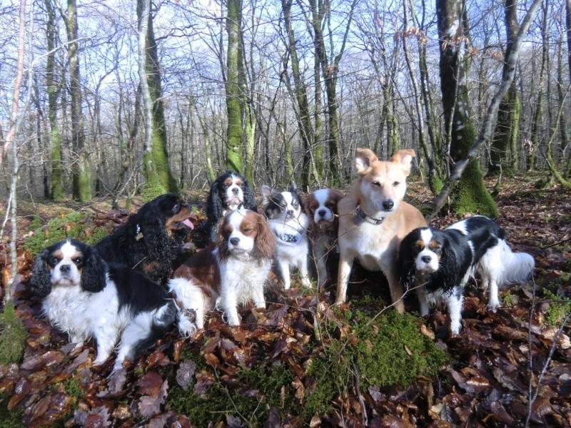 Rouky et les chats... Besoin de conseils Cimg0412