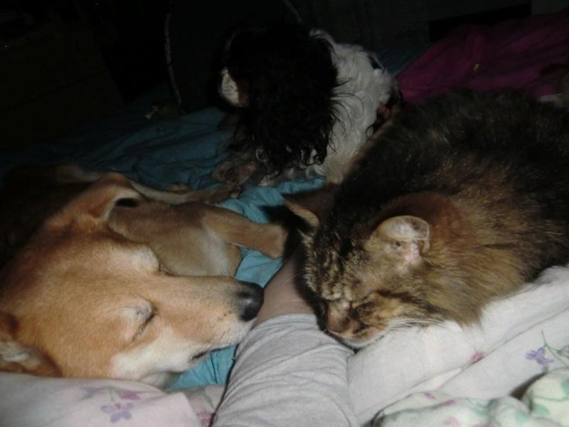 Rouky et les chats... Besoin de conseils - Page 2 Cimg0512