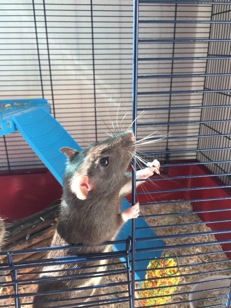 Mes ratons ne sortent que sur leur cage !  9_alph10