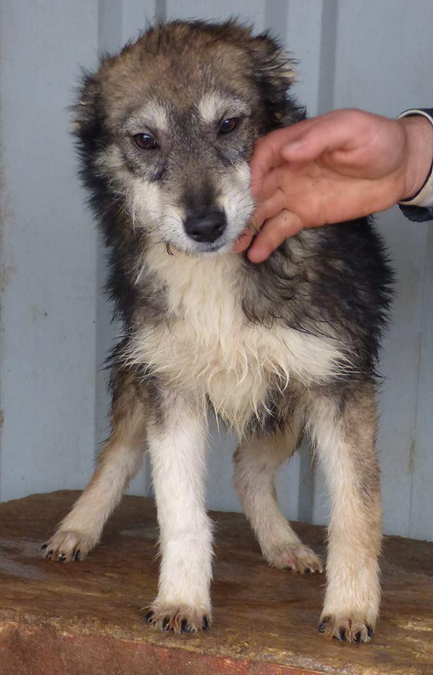 Lucian - CHEROKEE chiot femelle née en mars 2015 taille moyenne, croisée -en pension chez Lucian - adoptée par Sabrina (dpt77) 12286010