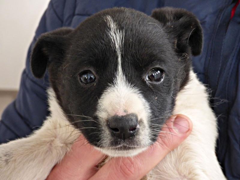 LIZZIE, chiot femelle, née en octobre 2015 (Pascani) -chez florin 12307511