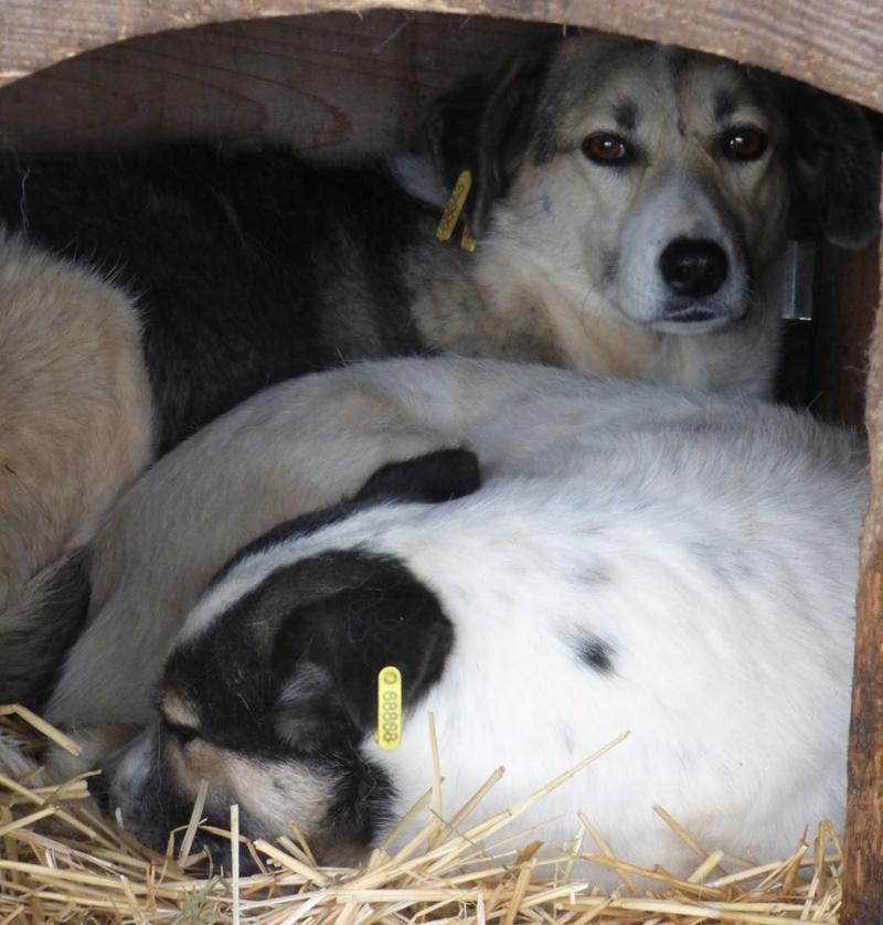 LUCILLE - femelle croisée de taille moyenne, née en 2012 - ( PASCANI )  - réservée adoption par ladyly (22) - décédée - Page 2 12363111