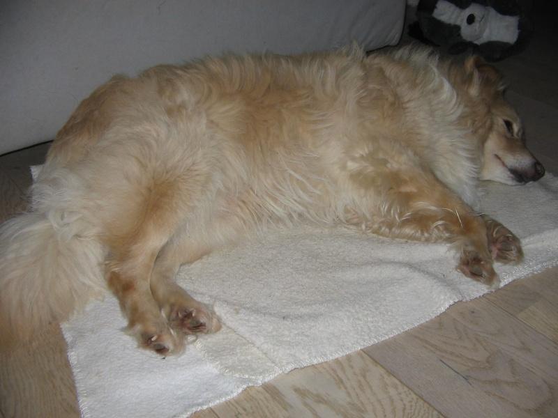 BILBAO, mâle croisé, taille petite à moyenne (Pascani) - adopté par Isabelle (Belgique) - Page 2 12546210