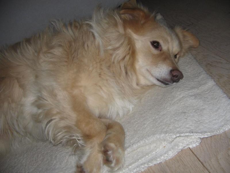 BILBAO, mâle croisé, taille petite à moyenne (Pascani) - adopté par Isabelle (Belgique) - Page 2 12562610
