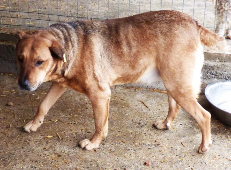 BALZAC - mâle croisé- taille moyenne né en 2008  (PASCANI) - en FA chez Yazou (Belgique) adopté par Cindy (Belgique) - Page 2 12716110