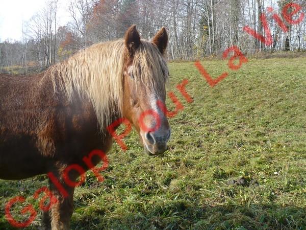 RAVENA - ONC trait née en 1983 - adopté en nçvepmbre 2010 par Cheyenne Ravena10