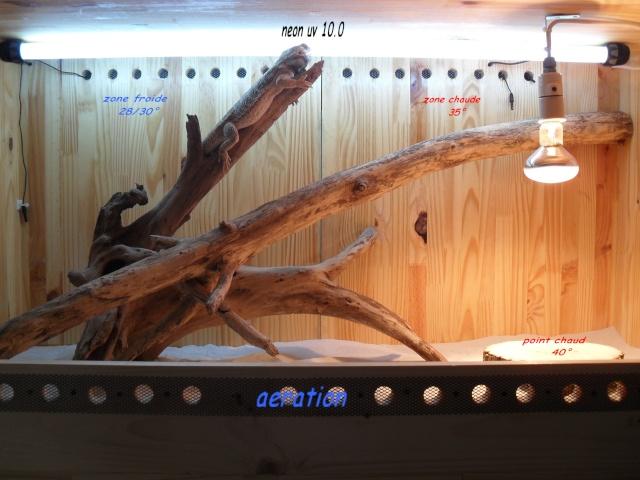 BZH22 Terrarium pogona Sdc10113