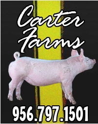 Reg. Duroc 1st parity Sow for sale Carter10