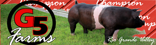 Champion Show Pigs - Forums,advertising, videos, o - home G5farm10