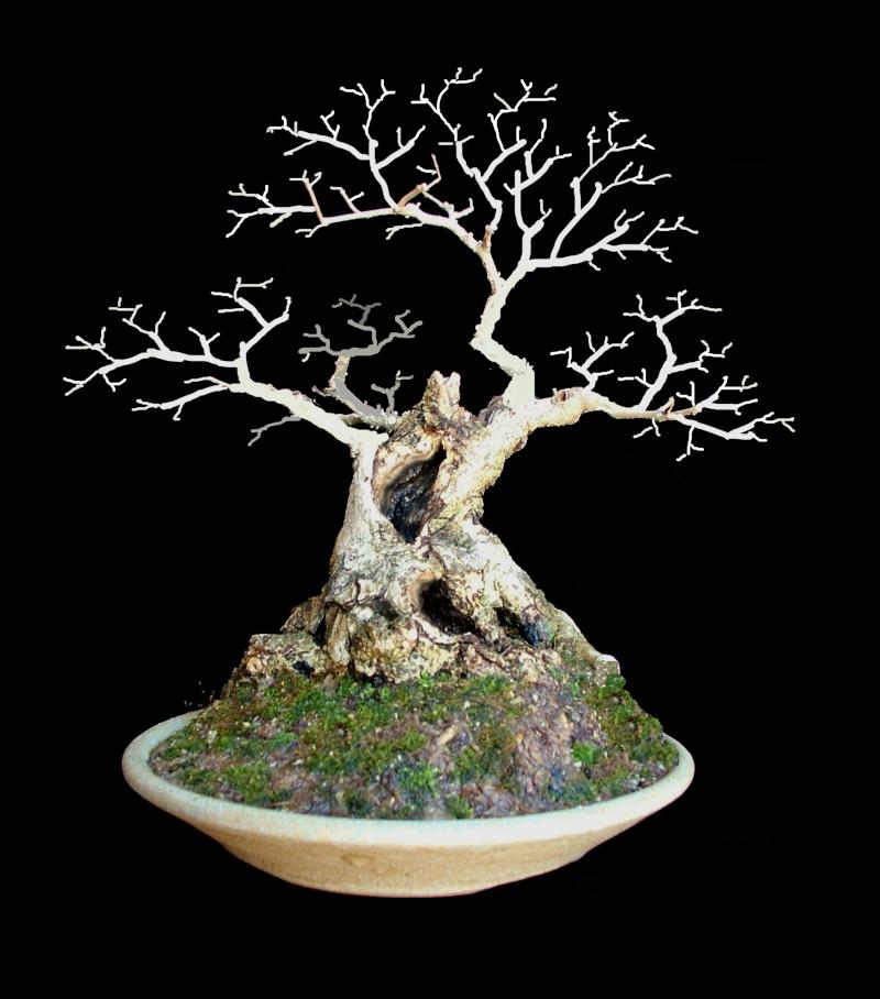 Gmelina hystrix - stump and virtual Gmelin14