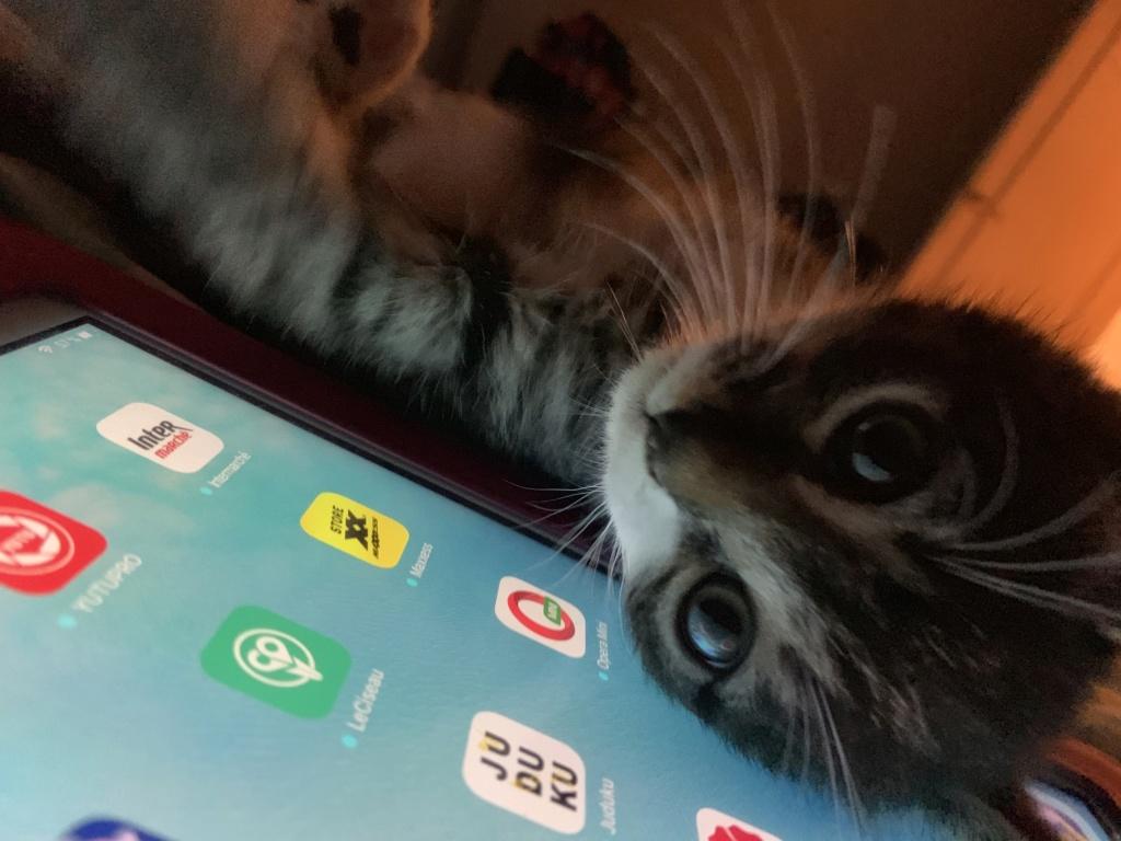 Roudoudou, chaton tigré né en mai 2019 82cb3d10
