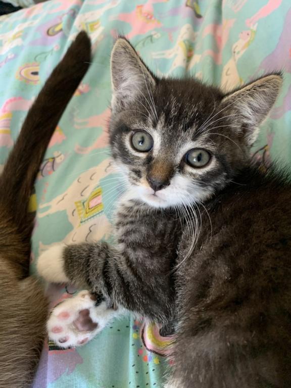 Roudoudou, chaton tigré né en mai 2019 E4ff4810