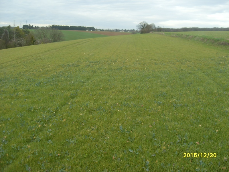 Ielo, herbicide colza - Page 2 Colza_10