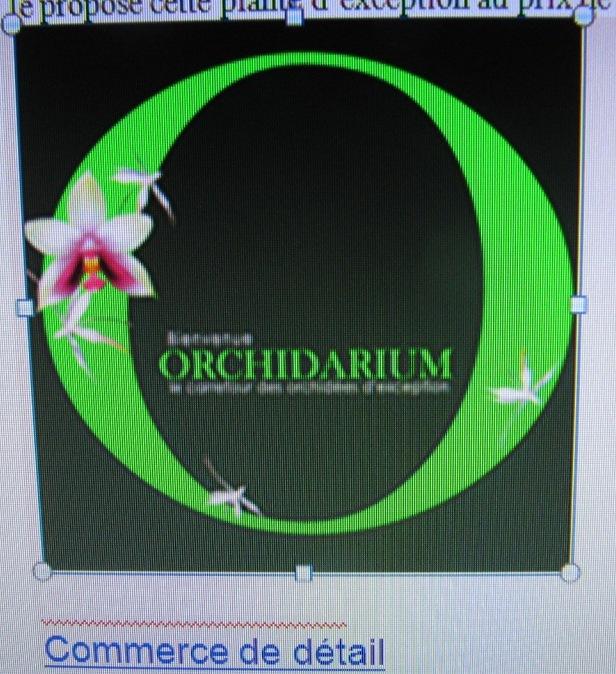 Orchidée   00414