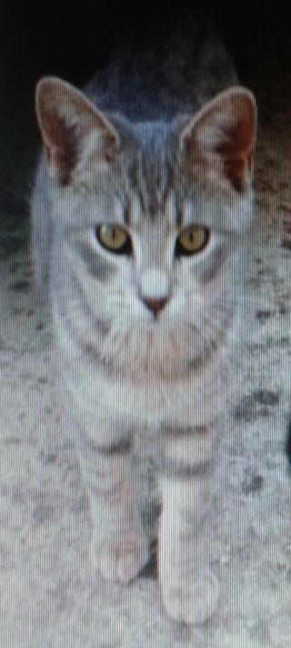 1 chaton, 5 mois, mâle, Var Houdin11