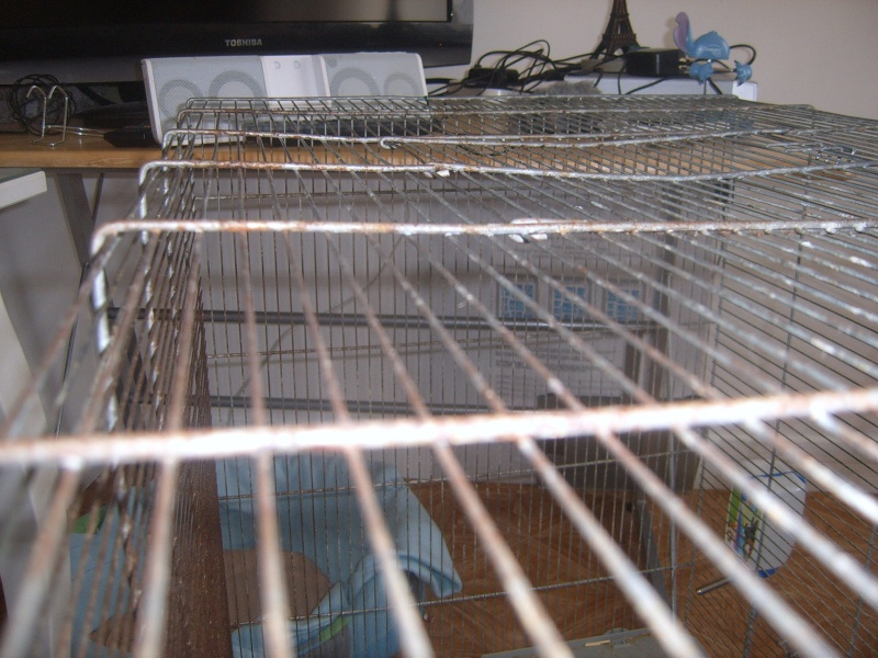 Vends cage Jenny 30€ Suc54313