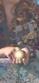 Hogwarts&Crepúsculo Df10