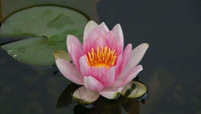La flore aquatique 2010_017