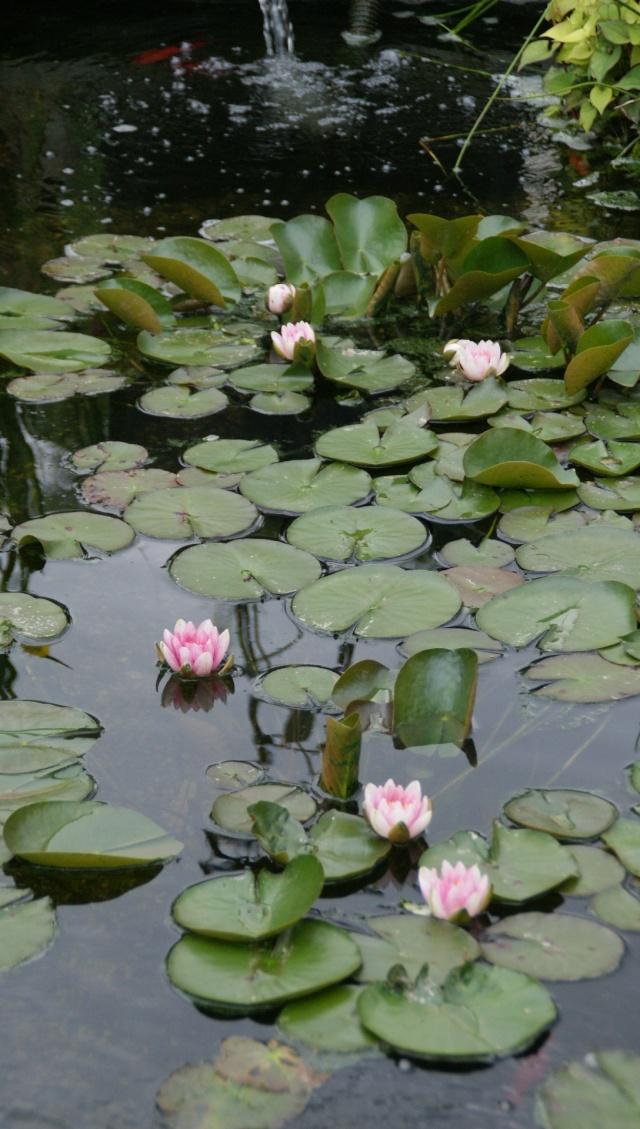 La flore aquatique 2010_018