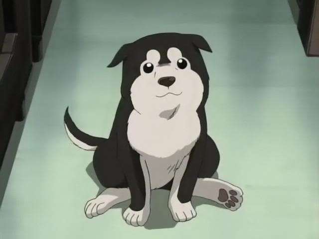 Inuma ( Done ) Puppy10