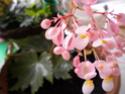 la premiére fleur Dscn3010
